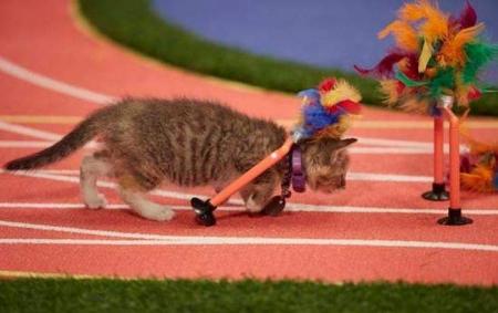 В США устроили веселую Олимпиаду для котят. Видео